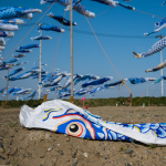 """Omagarihama"", Higashimatsushima, Miyagi, May 4, 2014: In Japan, koi-nobori (carp-shaped banners) are displayed in yards around Boy's Day, May 5, to wish for boys' healthy growth. A local youth who lost his family to the tsunami found his brother's favorite blue carp in the debris of their house. To console the spirits of the young victims like his brother, he started a project to collect blue carp from all over Japan. On this third year, 626 large and small carp are raised to the sky."
